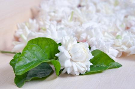 jessamine: Jasmine (Altri nomi sono Jasminum, Melati, Jessamine, Oleaceae gelsomino) fiori sparsi a bordo di fondo in legno