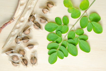 Moringa (Also known as Moringa oleifera Lam., MORINGACEAE, Futaba kom hammer, vegetable hum hum bug, Moringa bug Hoo) leaf and seed