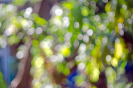 the sun and shade: Abstract Bokeh background of tree, sky, light and sun shade Stock Photo