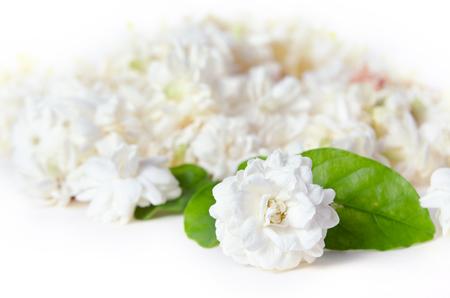 jessamine: Jasmine (Altri nomi sono Jasminum, Melati, Jessamine, Oleaceae gelsomino) fiori sparsi su sfondo bianco Archivio Fotografico