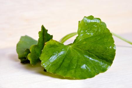 inflammatory: Centella asiatica (Also called as Asiatic Pennywort, Centella asiatica (Linn.) Urban, gotu, kola, ayuvera, Thankuni in Indian, Buabok in Thailand, Simon wort) leaf isolated on wooden board