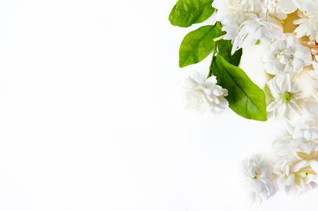 jessamine: Jasmine (Other names are Jasminum, Jasmine Melati, Jessamine, Jasmine Oleaceae) flowers spreaded on white background
