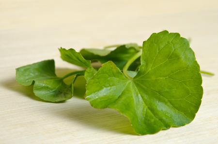 glutamate: Centella asiatica (Also called as Asiatic Pennywort, Centella asiatica (Linn.) Urban, gotu, kola, ayuvera, Thankuni in Indian, Buabok in Thailand, Simon wort) leaf isolated on wooden board