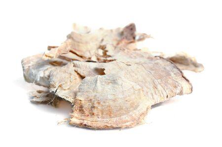 Pueraria mirifica, White Kwao Krua, Pueraria candollei Graham ex Benth. var mirifica isolated on white Stock Photo