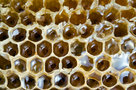 apis: Honey on bee nest or bee hive texture