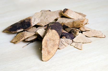 neutralize: Trigonostemon reidioides Kurz Craib (also named as herb oldtang red, or Mrs. Saint) isolated on wood. Boiled root can ease tuberculosis, cure asthma, and neutralize poisoning. Stock Photo