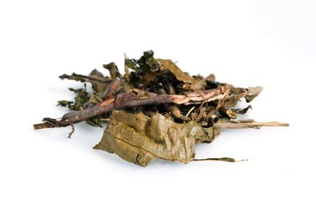 ilex aquifolium holly: Dried Sea holly (Acanthus ebracteatus Vahl) plant isolated on white