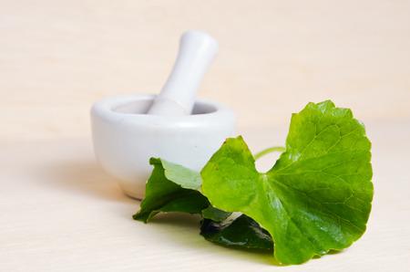 Centella asiatica (Also called as Asiatic Pennywort, Centella asiatica (Linn.) Urban, gotu, kola, ayuvera, Thankuni in Indian, Buabok in Thailand, Simon wort) leaf isolated on wooden board