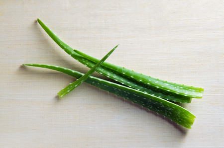 aloe barbadensis: Aloe Vera (Also called as Aloe barbadensis Mill., Star cactus, Aloe, Aloin, Jafferabad, vera or Barbados) a very useful herbal medicine for skin treatment and use in spa for skin care. Stock Photo