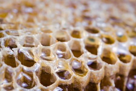 Honey on bee nest or bee hive texture