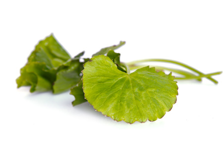 glutamate: Centella asiatica (Also called as Asiatic Pennywort, Centella asiatica (Linn.) Urban, gotu, kola, ayuvera, Thankuni in Indian, Buabok in Thailand, Simon wort) leaf isolated on white Stock Photo