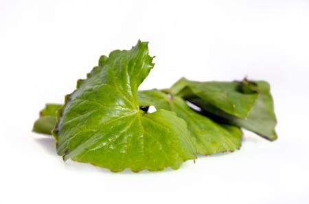 Centella asiatica (Also called as Asiatic Pennywort, Centella asiatica (Linn.) Urban, gotu, kola, ayuvera, Thankuni in Indian, Buabok in Thailand, Simon wort) leaf with mortar isolated on white