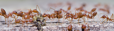 antrey: Group of ants are getting the food with blurred background