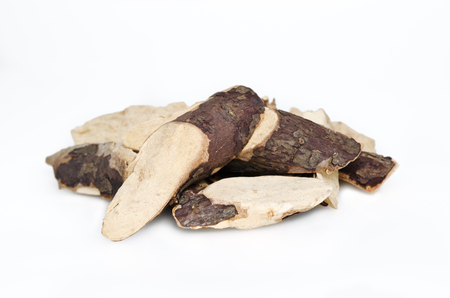 neutralize: Trigonostemon reidioides Kurz Craib (also named as herb oldtang red, or Mrs. Saint) isolated on white. Boiled root can ease tuberculosis, cure asthma, and neutralize poisoning Stock Photo
