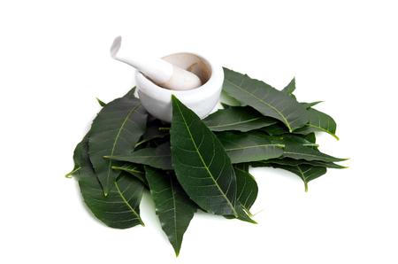 Margosa (also named as nim, neem tree, Melia, Azadirachta indica, mahogany, Meliaceae Margosa, Sadao, or Melia azedarach) leaf isolated on white background Standard-Bild