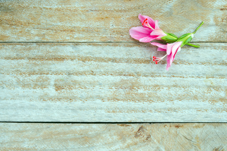 malvaceae: Hibiscus flower (also named as paper flower, shoe flower, Chaba in Thai, rose mallow, Hibiscus rosa sinensis, Malvaceae hibiscus, hibisceae) with blank text copy space isolated on wood background Stock Photo