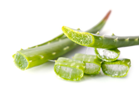 aloe barbadensis: Aloe Vera (Also called as Aloe barbadensis Mill., Star cactus, Aloe, Aloin, Jafferabad, vera or Barbados) a very useful herbal medicine for skin treatment and use in spa for skin care
