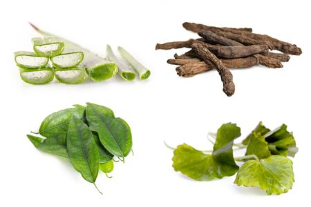 Aloe vera plant, stargrass root, centella leaf, and Tiliacora triandra Thai herb combination grouped and isolated on white background Stock Photo