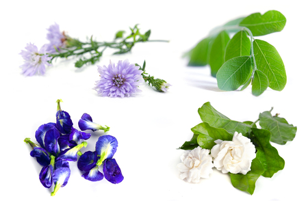 jessamine: Group of plant and flower (Moringa plant leaf, jasmine flower, butterfly pea, blue pea and violet flower) isolated on white background