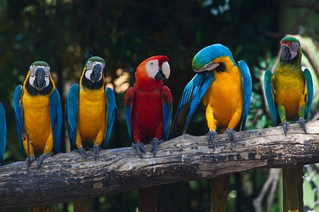 Colorful Macaw photo