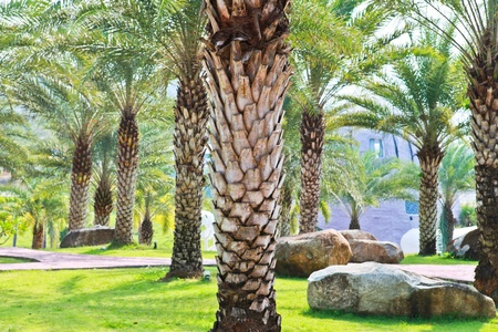 Palm tree garden photo
