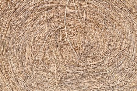 Swirly rice straw photo