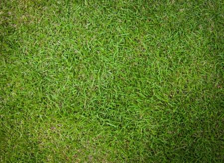 Fresh grass floor photo