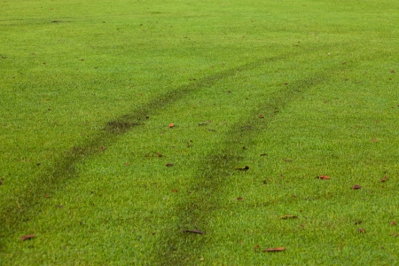 Car track on grass field photo