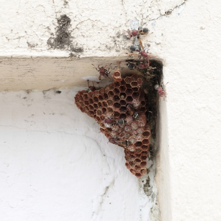 Hornet nest on wall photo