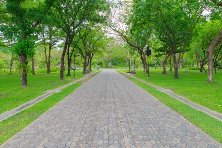 Green alley,path in the park Stock Photo