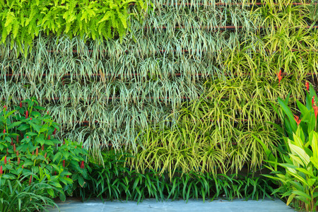 vertical garden Stock Photo