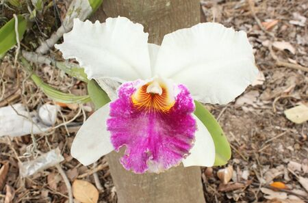 Close-up of white orchids in garden
