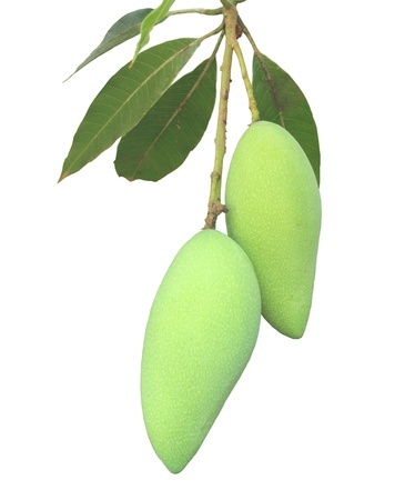 mango tree: Green caterpillar on a white background