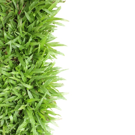 Grass frame on white background blank for text