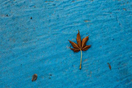Leaf falling dawn on the ground