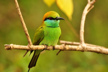 yala: Bird  Stock Photo