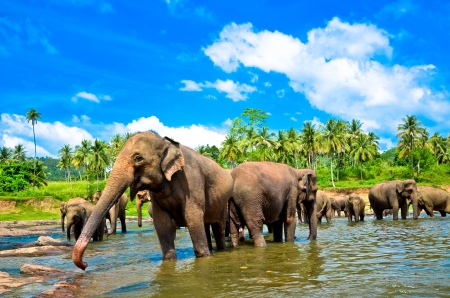 colombo: Elephant group in the river Stock Photo