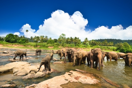 Elephants in beautiful landscape Фото со стока - 22942035
