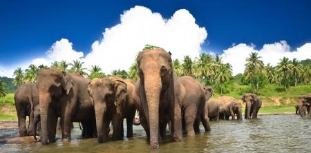 yala: Elephants in beautiful landscape