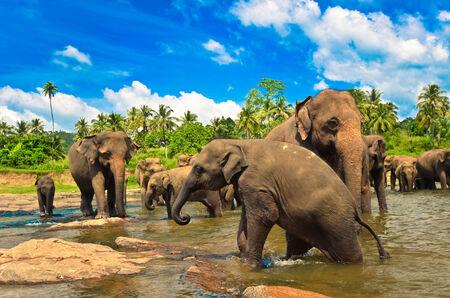 yala: Elephants in the jungle