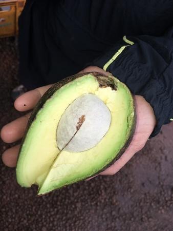 Avocado from farmer at Bolaven plateau Banco de Imagens