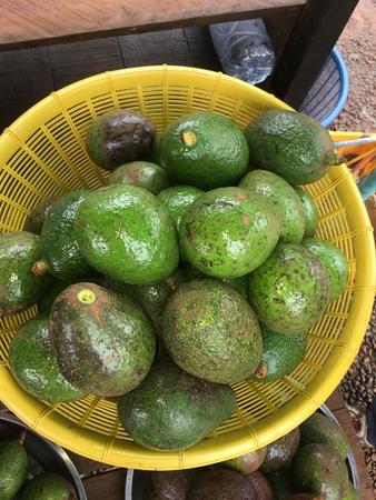Avocado from Bolaven plateau.