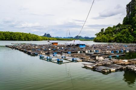 Fish farm are floated on the sea, Phang nga