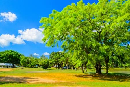 Landscape of public park in phuket Stock Photo