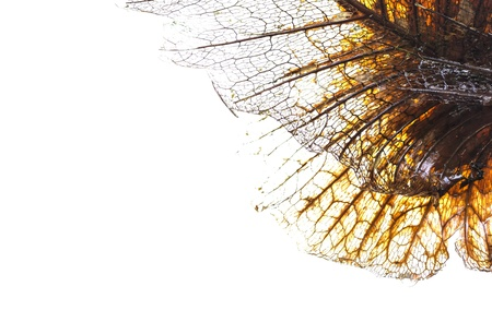 fibber: The fiber of a leaf is isolated on white