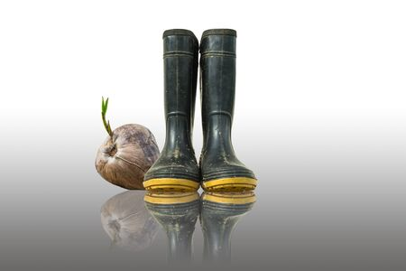 A pair of ruber boots with growing coconut  isolate on white photo