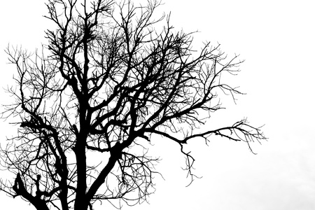 toter baum: Eine Silhouette Baum auf weißem Hintergrund isoliert
