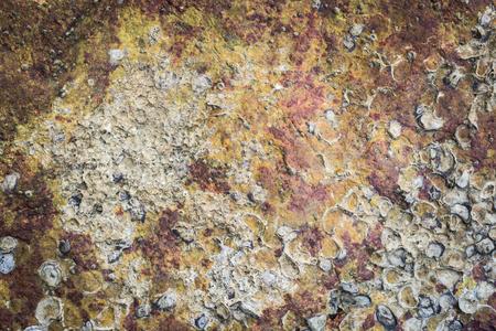 carcasse: carcasse de mer hu�tre sur le rocher