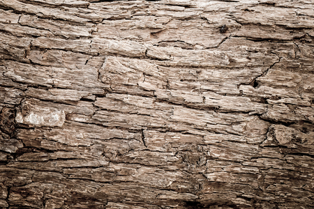 close up grunge tree bark texture background, wooden texture photo