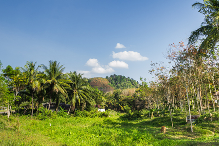 landscape of a field in the village under sunlight with blue sky photo